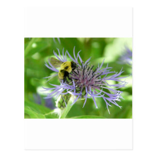 bee,on a batchelor button post cards