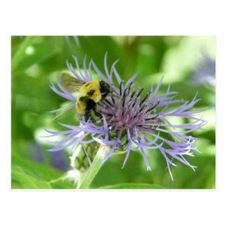 bee,on a batchelor button postcard