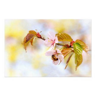 Bee On A Cherry Flower Art Photo