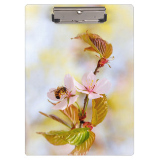 Bee On A Cherry Flower Clipboard