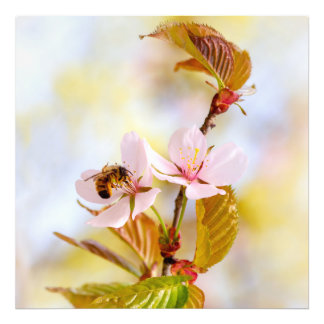 Bee On A Cherry Flower Photo