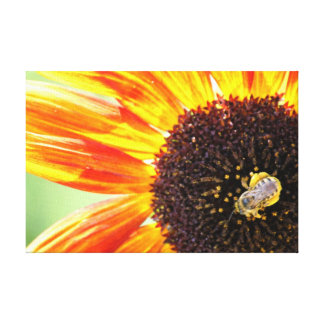 Bee on a Glowing Orange Sunflower Canvas Print