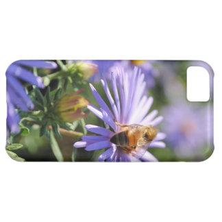 Bee on a Purple Flower iPhone 5 Case