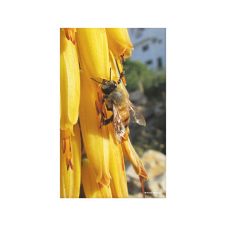 Bee on an Aloe Vera Flower Canvas Print