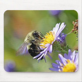 Bee on Aster Flower Photo Mouse Pad