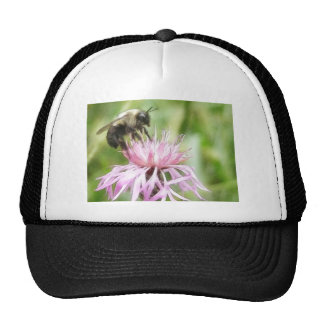 Bee On Bachelor Button Mesh Hats