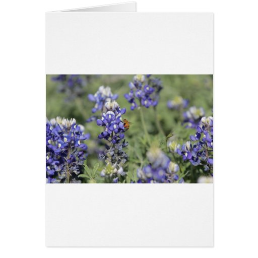 Bee on Bluebonnet Greeting Card