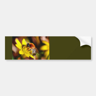 Bee on Celandine Bumper Sticker