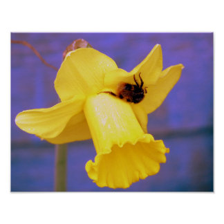 Bee On Daffodil Poster