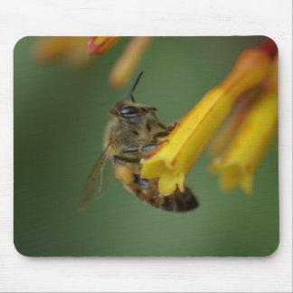 Bee on Firebush Mouse Pad
