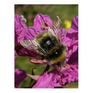 Bee on Fireweed, Unalaska Island Postcard