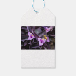 Bee on Flower Gift Tags