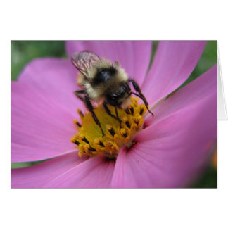 Bee on flower note card