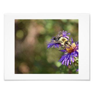 Bee on flower photo print