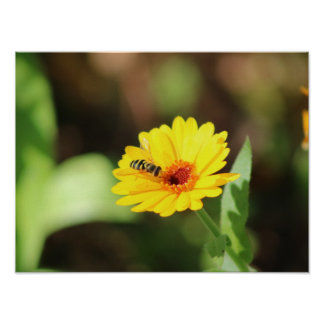Bee on flower poster- beautiful nature and animal poster