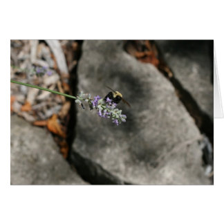 """bee on lavender"" by Larry Coressel Card"