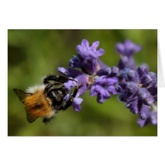 Bee on Lavender Card