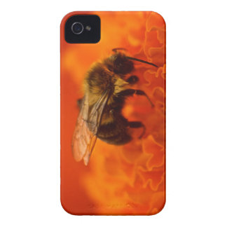 Bee on Orange Flower iPhone 4 Case-Mate Cases