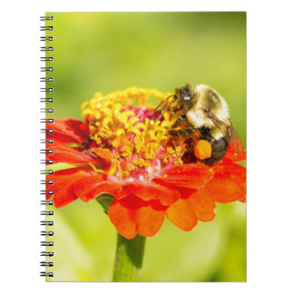 bee on red flower with pollen sacs notebook