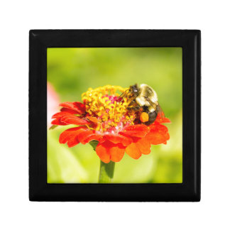 bee on red flower with pollen sacs small square gift box