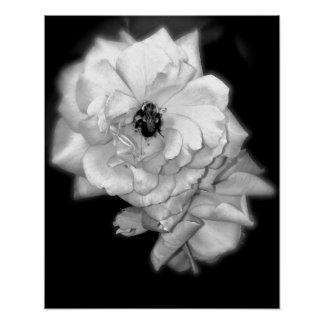 Bee on Roses in Black and White Poster