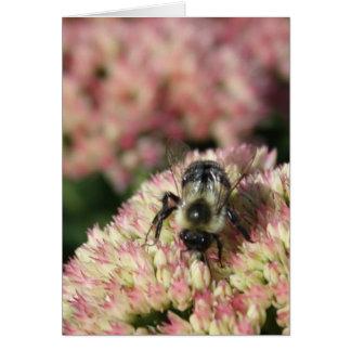 bee on sedum card