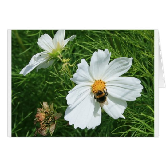 Bee on white flower card