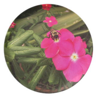 bee party plates