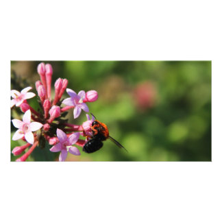 Bee Photo Card Template