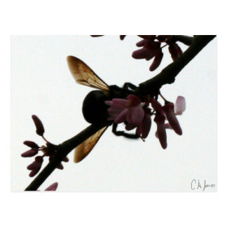 Bee Shadow Post Cards
