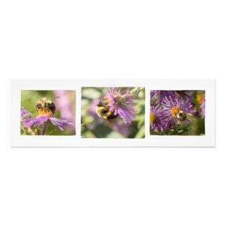 Bee-u-tiful Trio Photography Print Photo Print