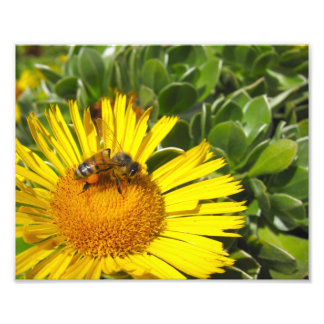 Bee Worker on Flower Garden Art Photo
