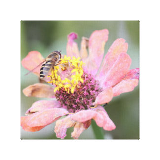 Bee working on daisy canvas print