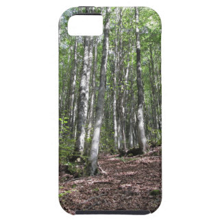 Beech forest landscape in summer . Tuscany, Italy Case For The iPhone 5