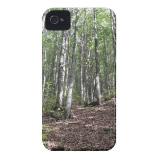 Beech forest landscape in summer . Tuscany, Italy Case-Mate iPhone 4 Case