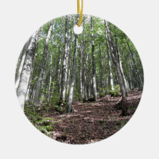 Beech forest landscape in summer . Tuscany, Italy Ceramic Ornament