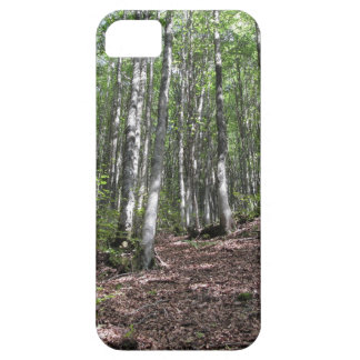Beech forest landscape in summer . Tuscany, Italy iPhone 5 Cover