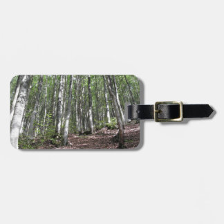 Beech forest landscape in summer . Tuscany, Italy Luggage Tag