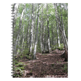 Beech forest landscape in summer . Tuscany, Italy Notebook
