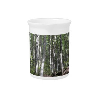 Beech forest landscape in summer . Tuscany, Italy Pitcher