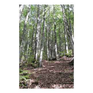 Beech forest landscape in summer . Tuscany, Italy Stationery