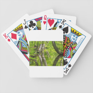 Beech tree trunks with water in spring forest bicycle playing cards