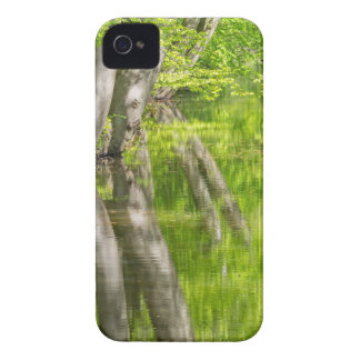 Beech tree trunks with water in spring forest iPhone 4 Case-Mate case