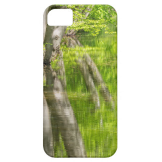 Beech tree trunks with water in spring forest iPhone 5 cover