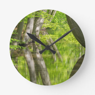 Beech tree trunks with water in spring forest round clock
