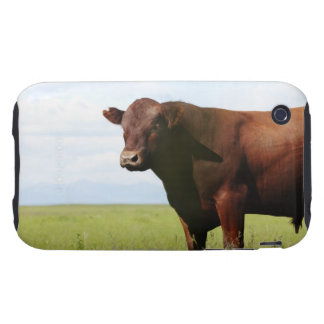 Beef cow in field tough iPhone 3 cases