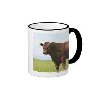 Beef cow in field ringer mug