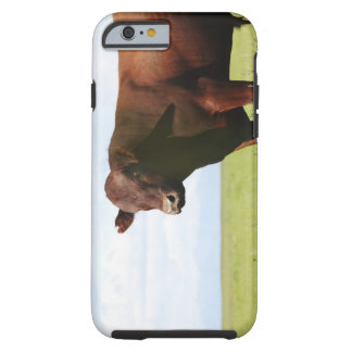 Beef cow in field tough iPhone 6 case