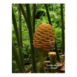 Beehive Ginger Tropical Plant Postcard