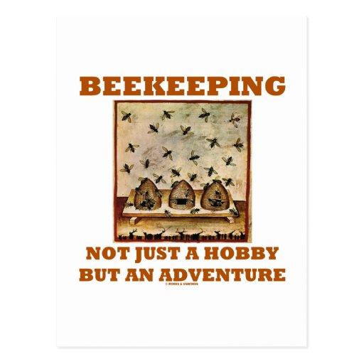 Beekeeping Not Just A Hobby But An Adventure Post Card